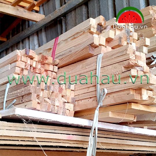 Cây gỗ thông - Cây gia cố